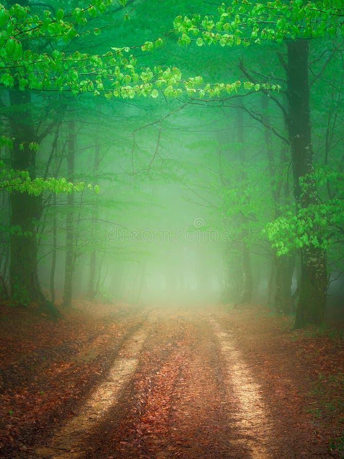 Trayectoria en bosque de niebla en la primavera imagen de archivo