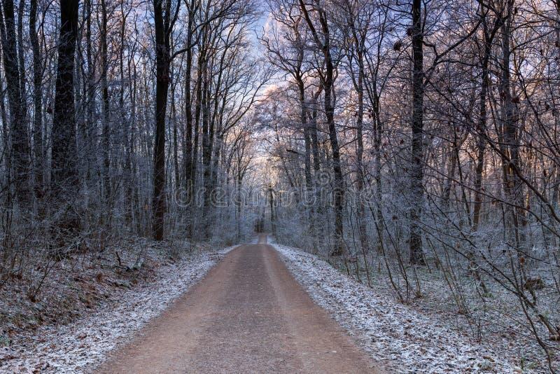Trayectoria en bosque del invierno imagen de archivo libre de regalías