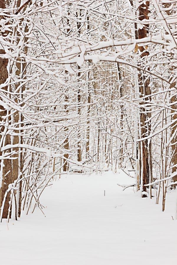 Trayectoria en bosque, fondo natural Nevado fotografía de archivo libre de regalías
