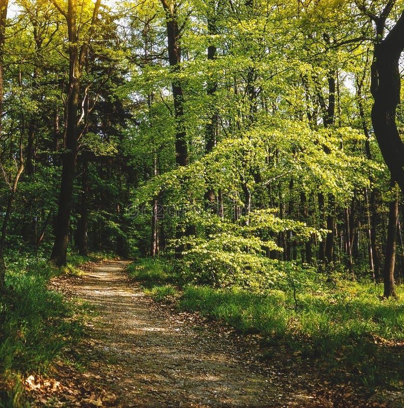 Trayectoria en bosque en Hungría fotografía de archivo libre de regalías