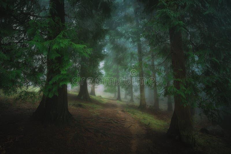 trayectoria en bosque oscuro de niebla foto de archivo