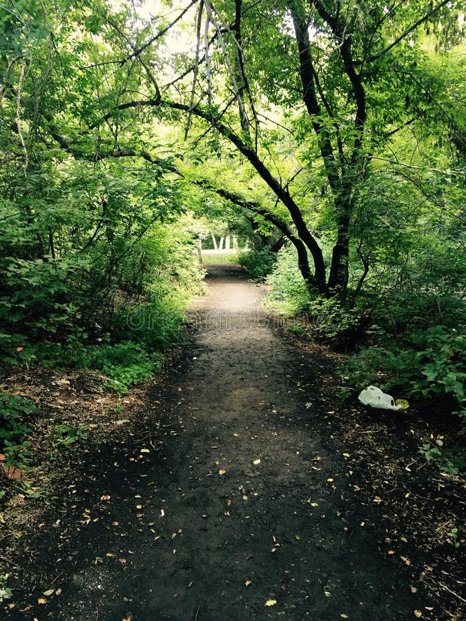 trayectoria en el bosque foto de archivo