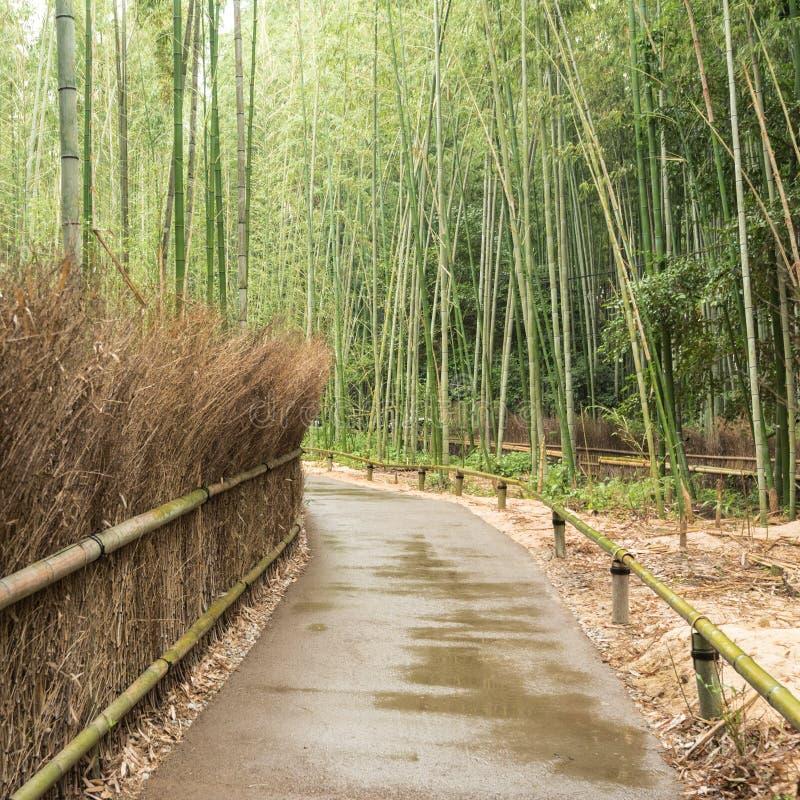 Trayectoria en el bosque de bambú de Arashiyama en Kyoto fotografía de archivo