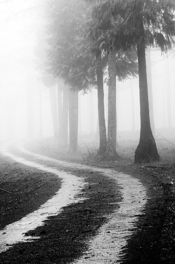 Trayectoria en el bosque de niebla foto de archivo