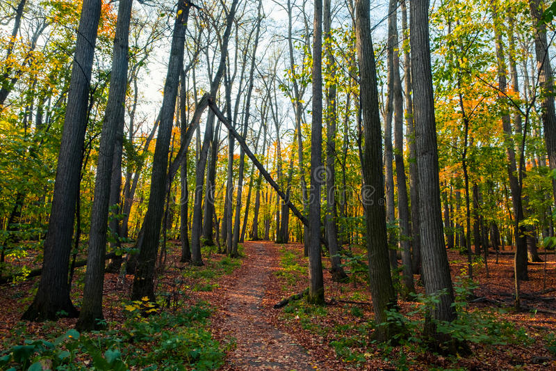 Trayectoria en el bosque del otoño fotos de archivo libres de regalías