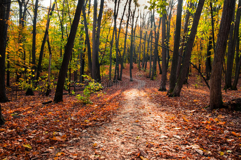 Trayectoria en el bosque del otoño imagen de archivo