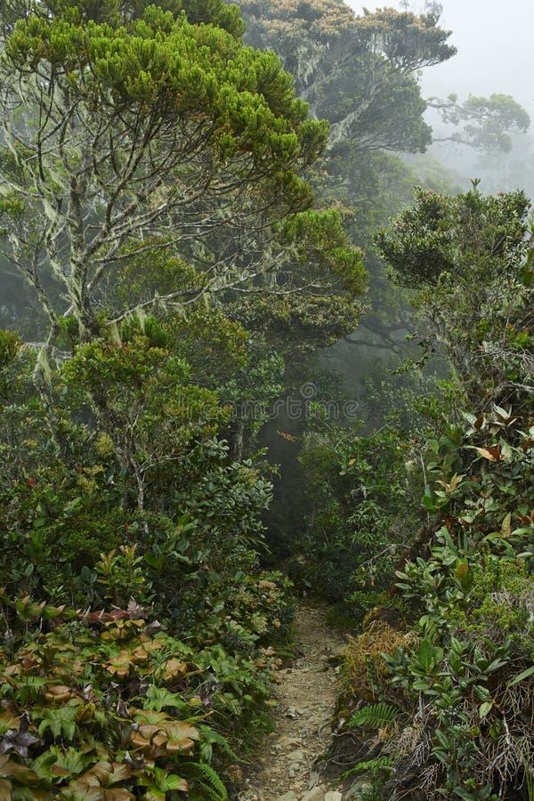 Trayectoria en el bosque tropical foto de archivo libre de regalías