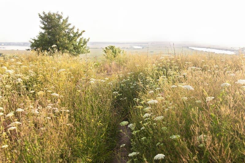Trayectoria en un prado del verano en día de verano Paisaje del VERANO fotografía de archivo libre de regalías