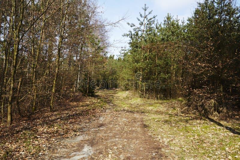 Trayectoria en una reserva de naturaleza de madera fotografía de archivo