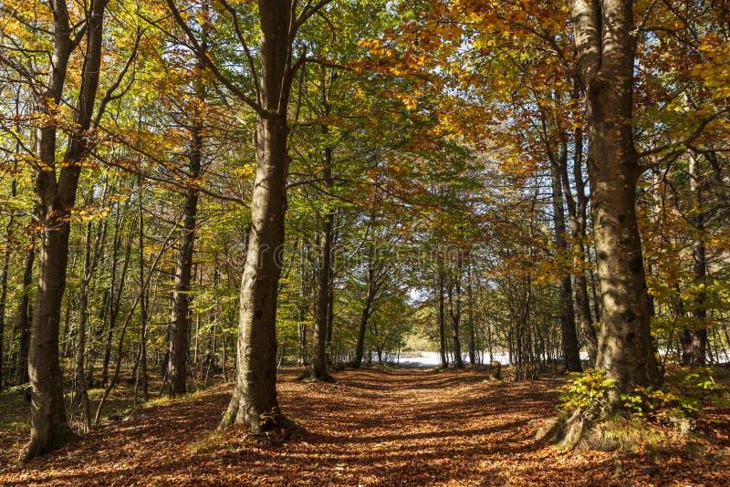 Trayectoria escénica a través del bosque en otoño foto de archivo libre de regalías