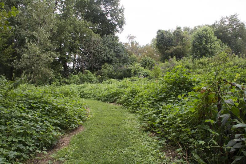 Trayectoria herbosa verde a través del prado fotos de archivo libres de regalías