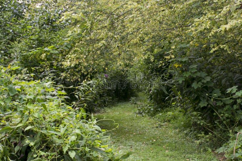 Trayectoria herbosa verde a través del prado fotografía de archivo