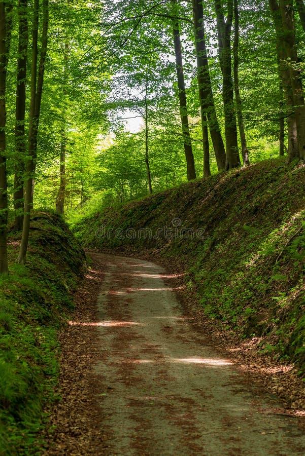 Trayectoria hueco sombría a través del bosque imagenes de archivo