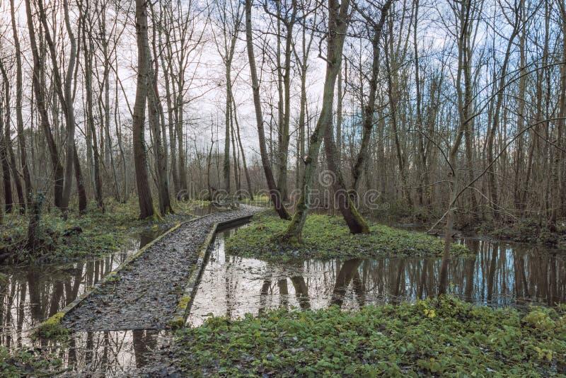 Trayectoria hundida en bosque en invierno imagenes de archivo