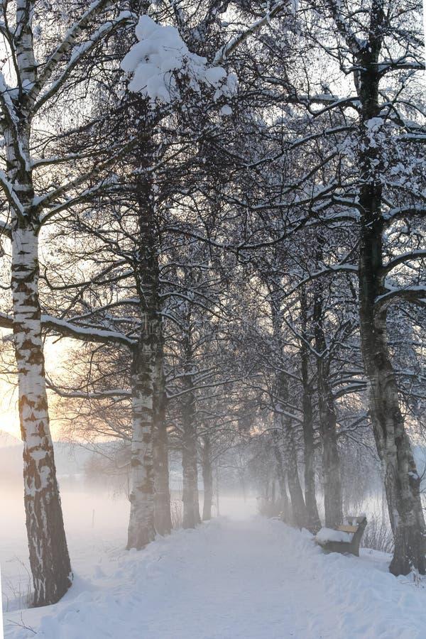 Trayectoria III del abedul Nevado fotos de archivo libres de regalías
