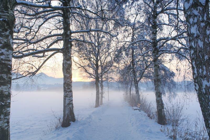 Trayectoria IV del abedul Nevado fotos de archivo libres de regalías