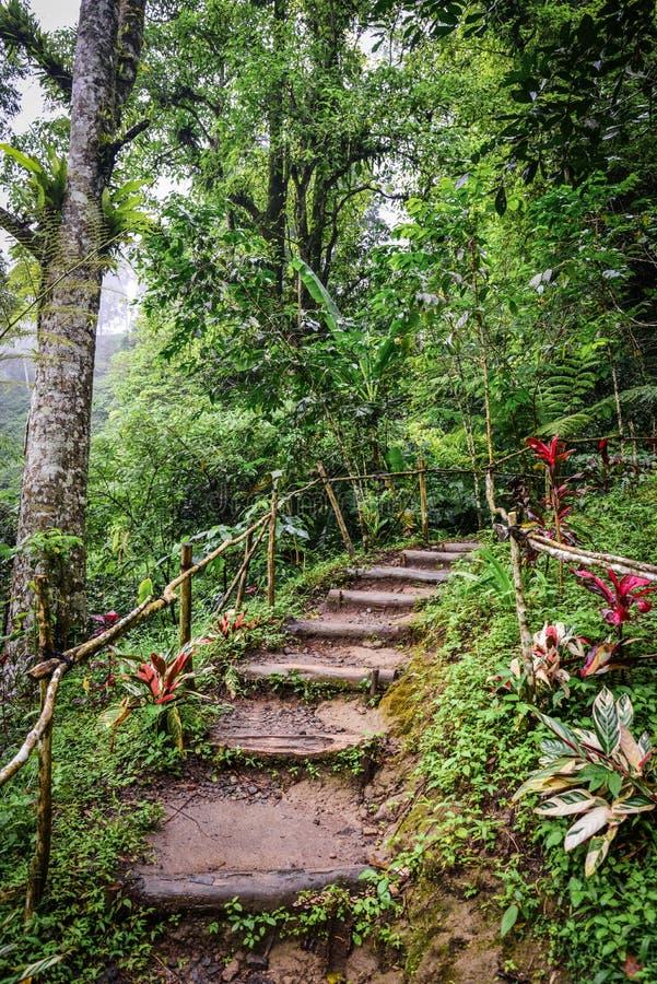 Trayectoria a la cascada de la selva fotografía de archivo