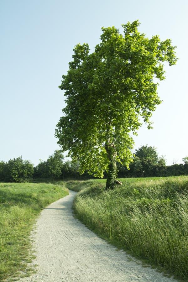 Download Trayectoria A La Naturaleza Foto de archivo - Imagen de ciclo, brisa: 41902006