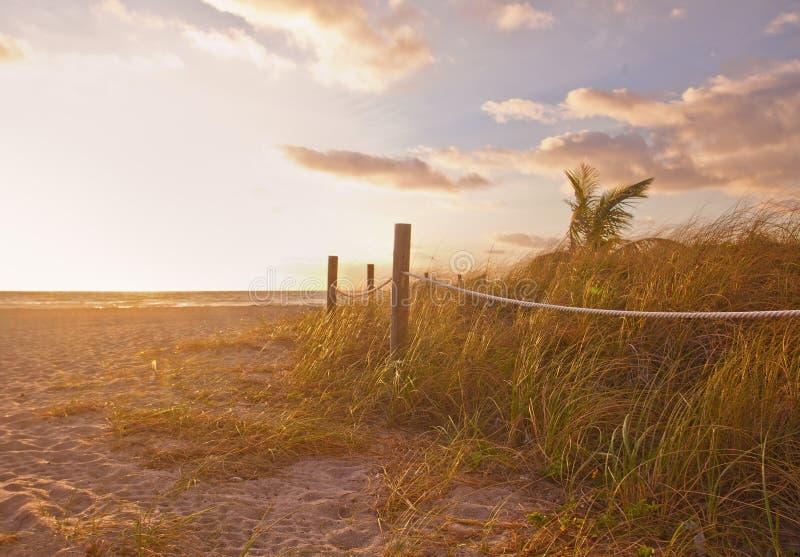 Trayectoria a la playa con la avena del mar, las dunas de la hierba en la salida del sol o puesta del sol en Miami Beach imágenes de archivo libres de regalías