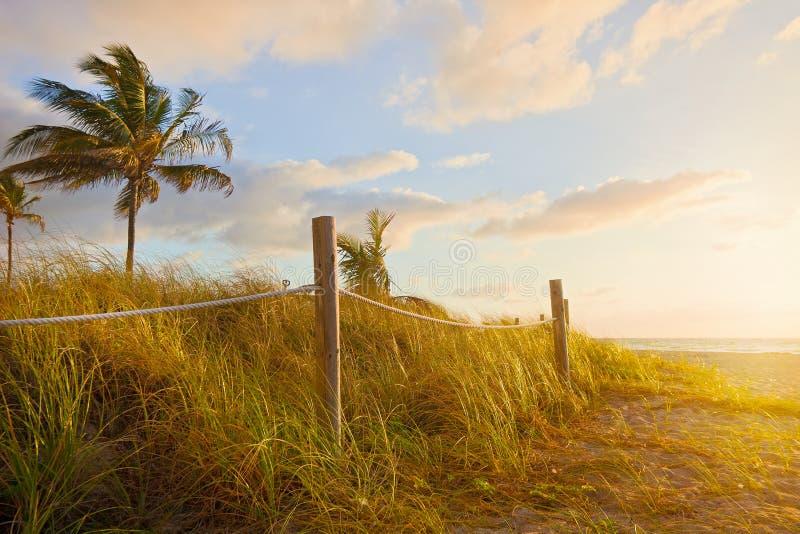 Trayectoria a la playa con la avena del mar, las dunas de la hierba en la salida del sol o puesta del sol en Miami Beach imagen de archivo