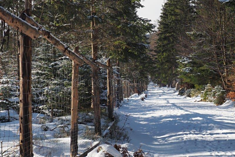 Trayectoria nevada del invierno en el bosque de pinos y de piceas verdes con una rejilla de cercado que corre a lo largo de la tr foto de archivo