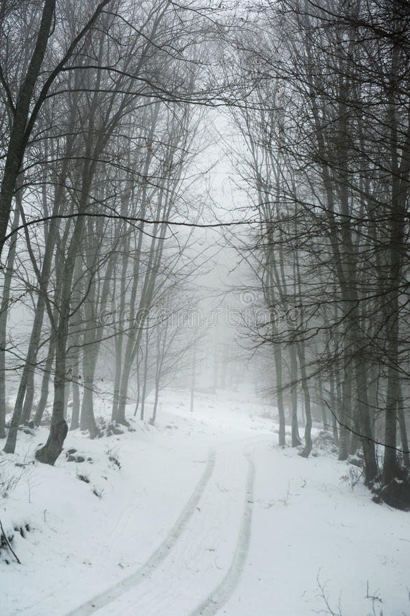 Trayectoria Nevado fotos de archivo libres de regalías