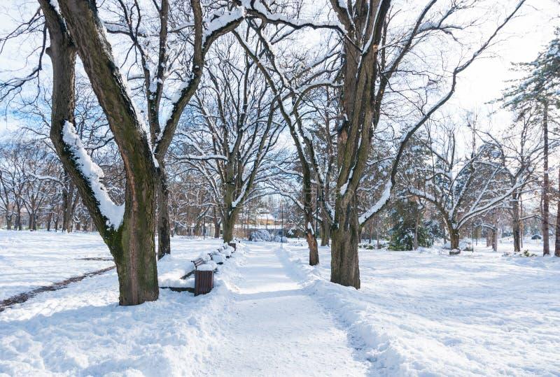 Trayectoria o camino en el parque con los árboles de la nieve y el banco de madera en la estación y la luz del sol del invierno imagen de archivo
