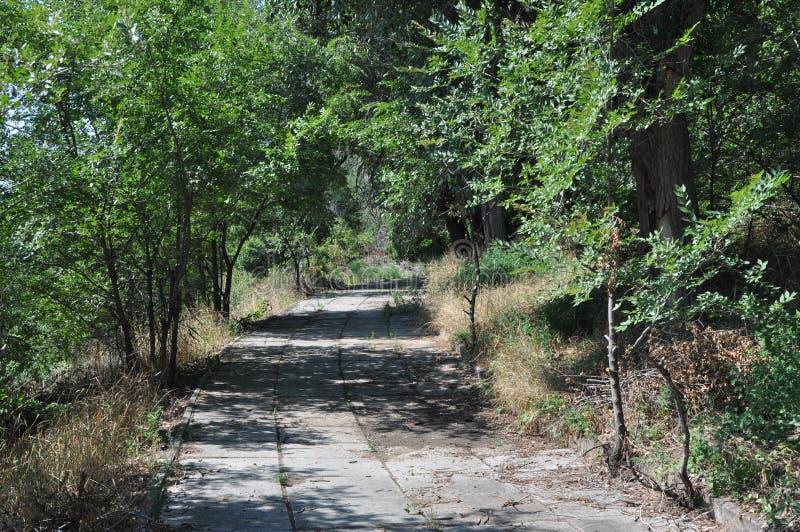 Trayectoria pavimentada en un bosque soleado verde fotos de archivo