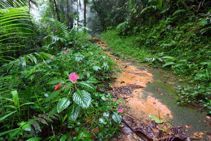 Trayectoria Puerto Rico de la selva tropical foto de archivo libre de regalías