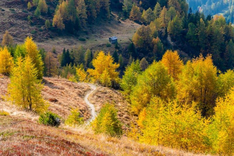 Trayectoria que camina alpina entre alerces coloridos en el otoño, área de Grossglockner, Austria fotos de archivo libres de regalías