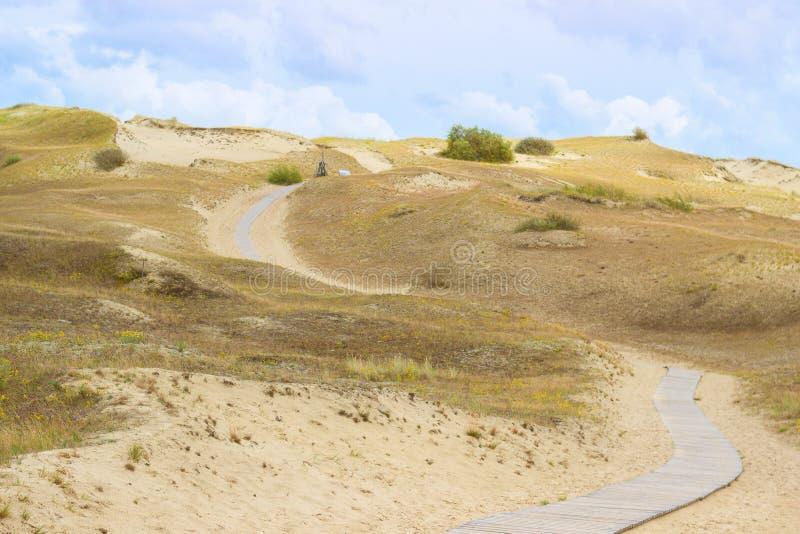 Trayectoria que camina de madera en dunas muertas en Neringa, Lituania fotografía de archivo