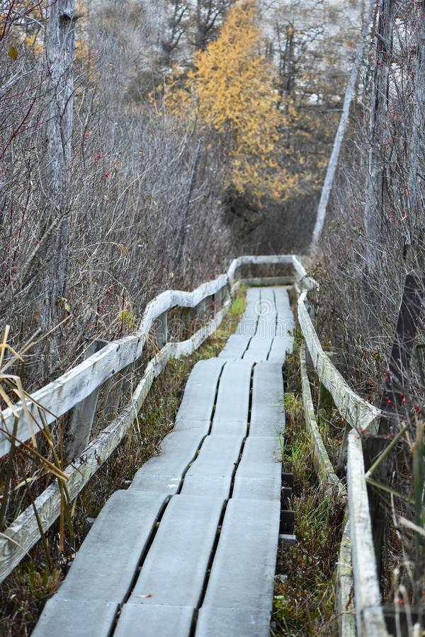 Trayectoria que camina de madera a través del bosque foto de archivo libre de regalías
