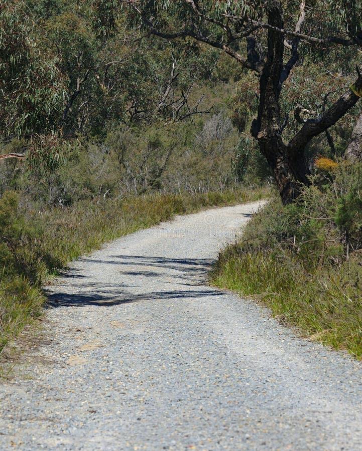 Trayectoria que camina del asfalto en bosque imagenes de archivo