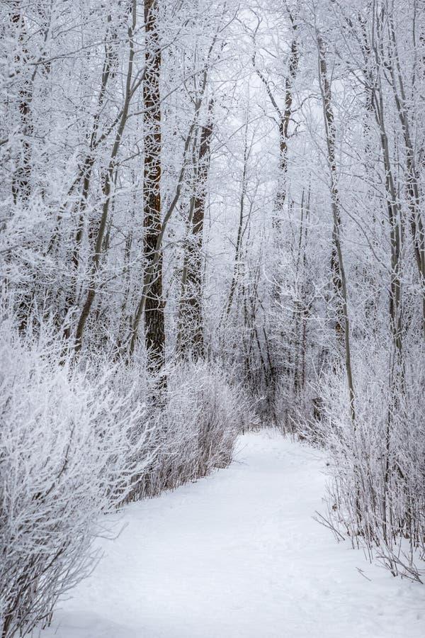 Trayectoria que camina del invierno fotografía de archivo libre de regalías