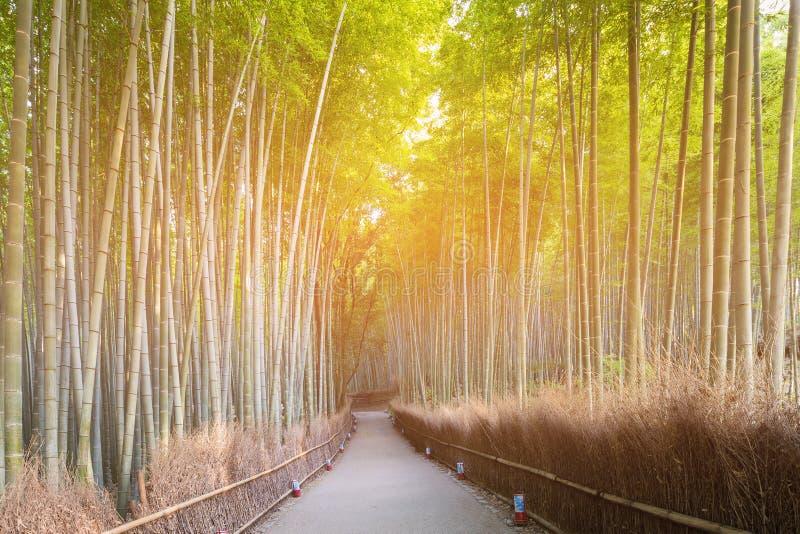 Trayectoria que camina en el bosque de bambú Arashiyama Kyoto Japón fotografía de archivo