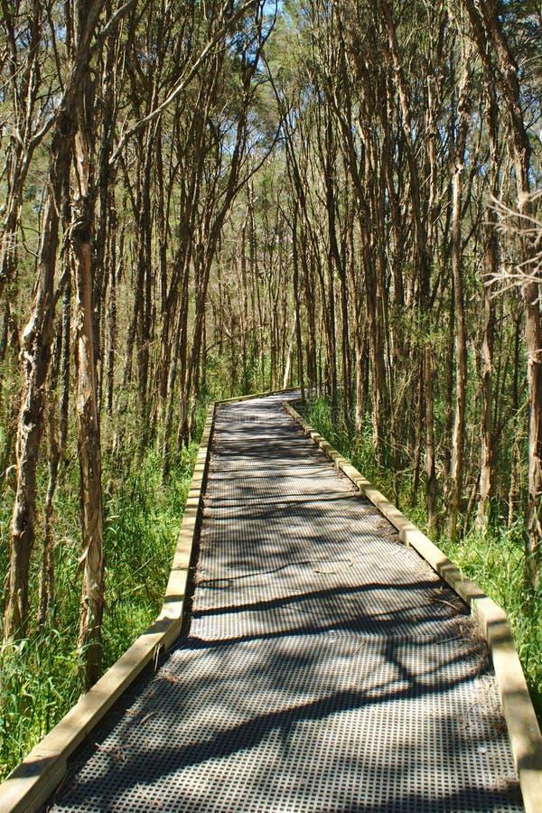 Trayectoria que camina en el bosque rodeado con los árboles altos imagen de archivo