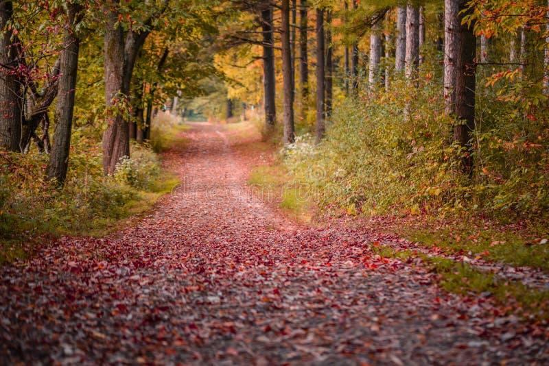 Trayectoria que camina en el parque de estado en color máximo de la caída foto de archivo libre de regalías