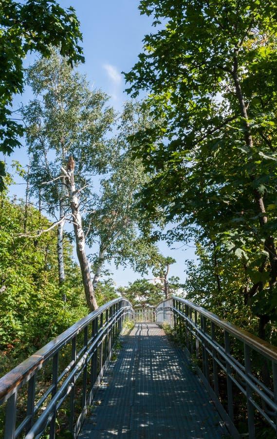 Trayectoria que camina equipada y cercada en un bosque verde grueso imagen de archivo