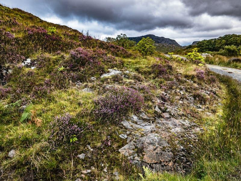 Trayectoria que camina a través de las laderas Heathered en montañas escocesas fotografía de archivo libre de regalías