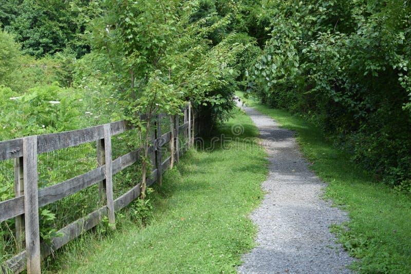Trayectoria que camina a través del bosque al lado de la cerca imagen de archivo libre de regalías