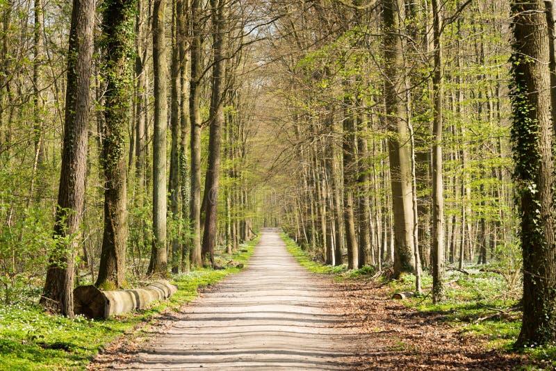 Trayectoria que camina y biking en un bosque foto de archivo
