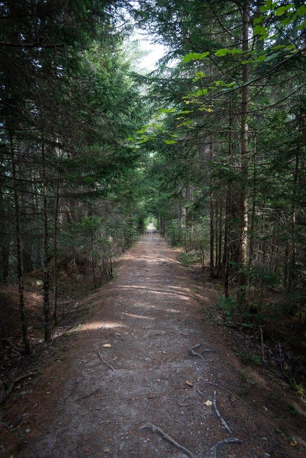 Trayectoria que lleva en el bosque foto de archivo