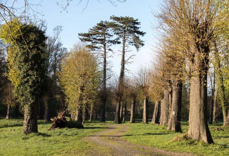 Trayectoria romántica y misteriosa del callejón con los árboles grandes viejos en parque Paisaje de la naturaleza de la belleza P foto de archivo