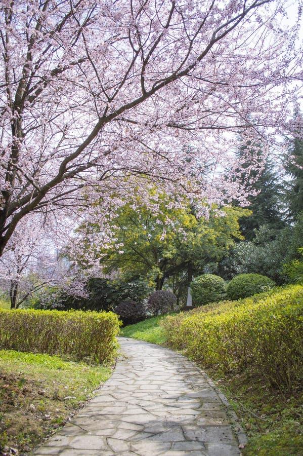 Trayectoria rosada del flor de las flores fotos de archivo libres de regalías