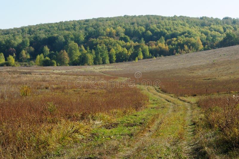 Trayectoria sola del país para poner verde el bosque distante fotografía de archivo libre de regalías