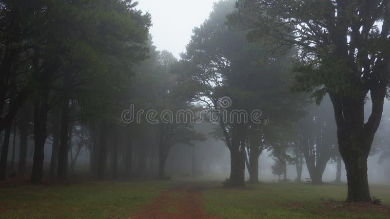 Trayectoria solitaria a través de un bosque de niebla, fantasmal, con los árboles espeluznantes, oscuros fotografía de archivo libre de regalías