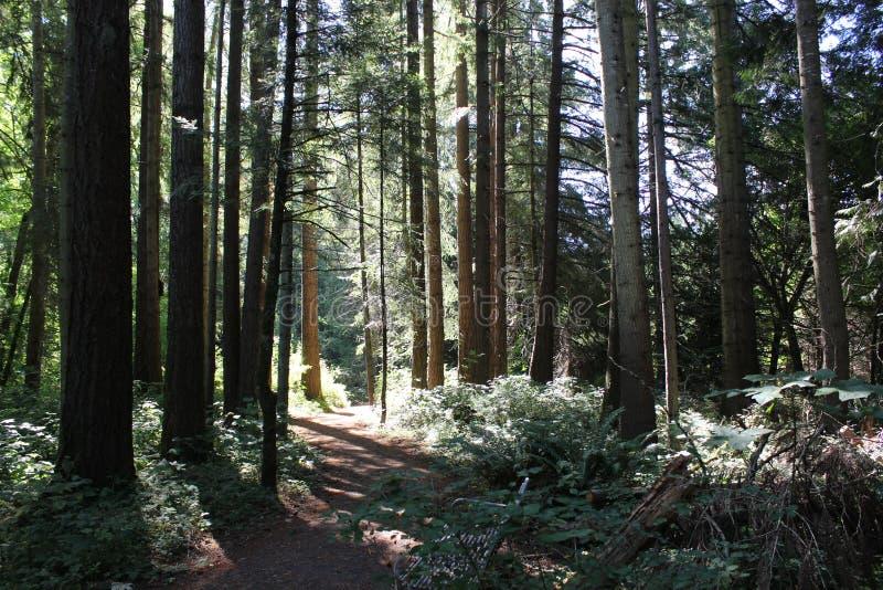 Trayectoria a través de árboles fotos de archivo