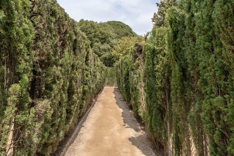 Trayectoria a través de árboles de ciprés arreglados en laberinto foto de archivo libre de regalías