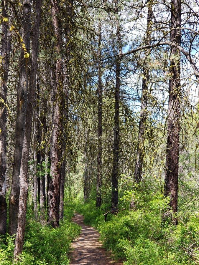 Trayectoria a través del bosque imagen de archivo