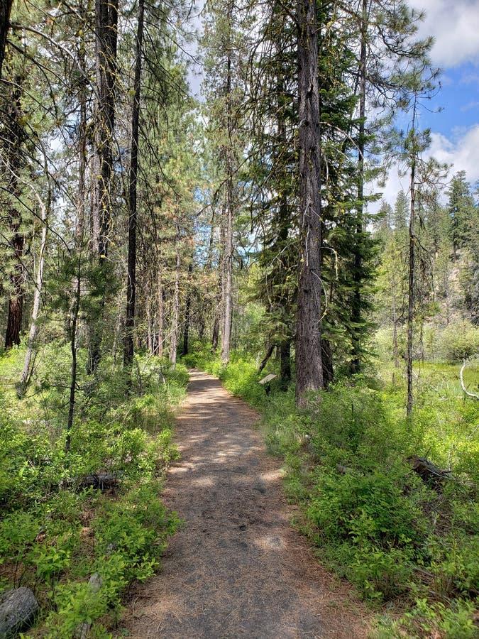 Trayectoria a través del bosque fotografía de archivo